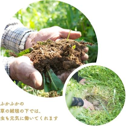 有機栽培土作り