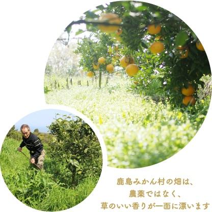 草倒し農法