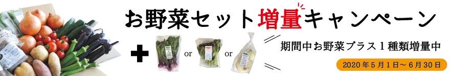 お野菜セット増量キャンペーン