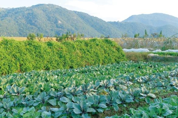 ミモレ農園お野菜だんご