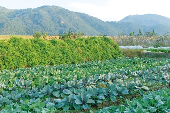 ミモレ農園の新鮮野菜を使用したお野菜ペースト