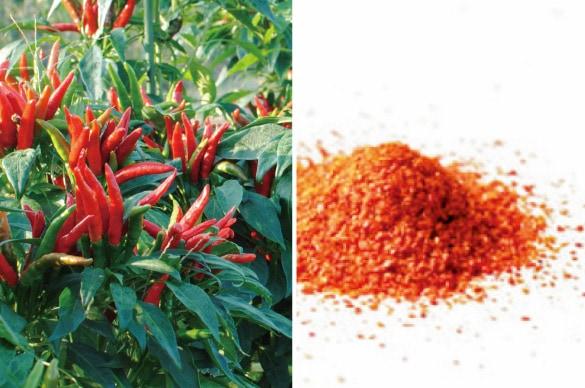 ミモレ農園で育った農薬不使用バジルを100%使用した、無添加「唐辛子粉末」です。