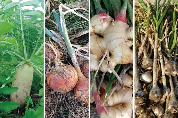 ミモレ農園で育った農薬不使用旬玉ねぎを100%使用した、無添加和風「玉ねぎソース」です。