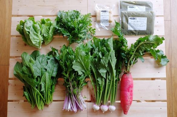 ミモレ農園お野菜セット