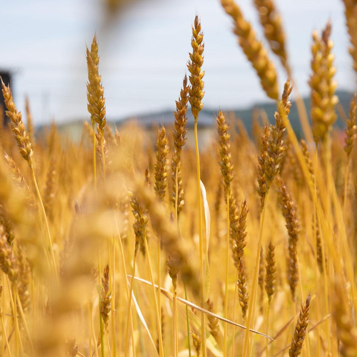 小麦粉バナー