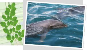 イルカの泳ぐ美しい蒼い海に囲まれた熊本県、天草