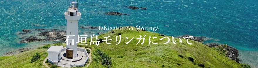 石垣島モリンガについて