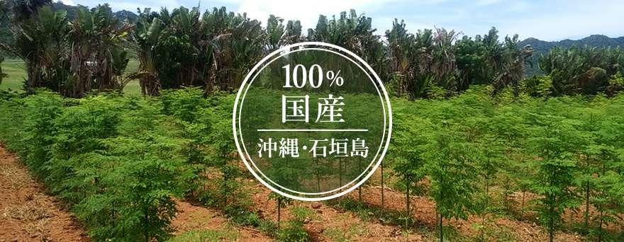 100% 国産 沖縄・石垣島