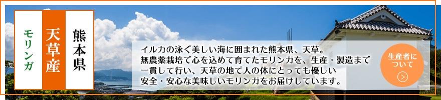 熊本県 天草産 モリンガ