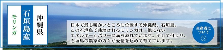 沖縄県 石垣島産 モリンガ