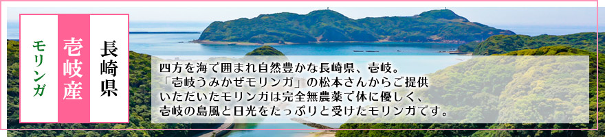 長崎県 壱岐産 モリンガ