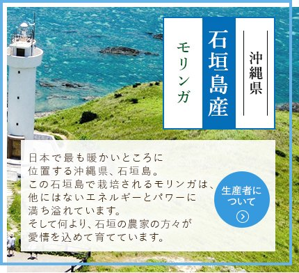沖縄県 石垣島産 モリンガ 日本で最も暖かいところに位置する沖縄県、石垣島。この石垣島で栽培されるモリンガは、他にはないエネルギーとパワーに満ち溢れています。そして何より、石垣の農家の方々が愛情を込めて育てています。