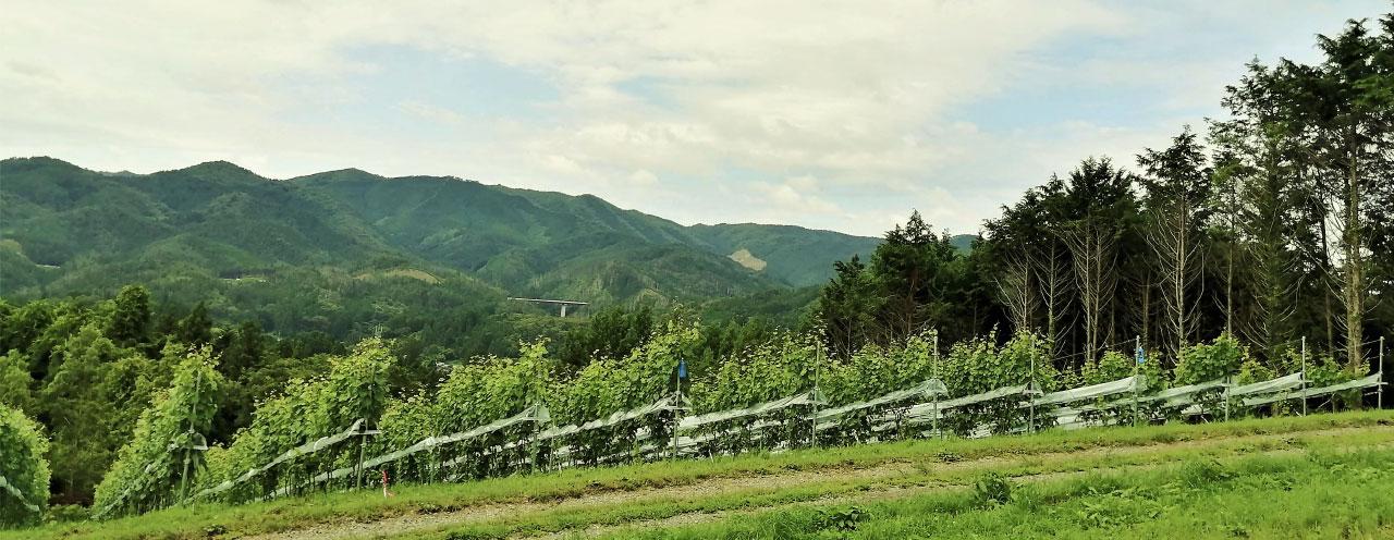 ワイン造りと畑