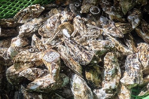 牡蠣殺菌処置