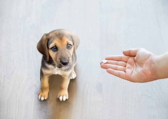 犬に向かってお手を促す人の手