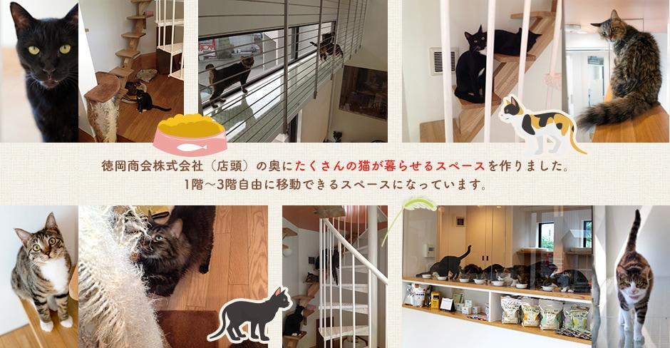徳岡商会株式会社(店頭)の奥にたくさんの猫が暮らせるスペースを作りました。1階〜3階自由に移動できるスペースになっています。