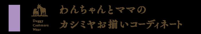 わんちゃんウェアキャッチコピーの画像