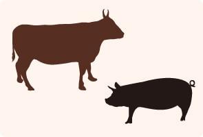肉の部位について