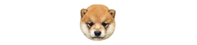 子犬クッション画像