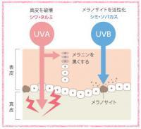 ヴェリマ UVプロテクション サンヴェール 【平日14時まで即日発送】