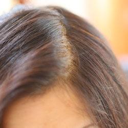 ヘナ 白髪染め 天然100% 安心安全 無添加
