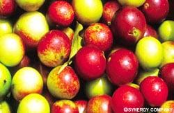 美容と健康、天然100%ビタミンC、ベリーベリープレミアム