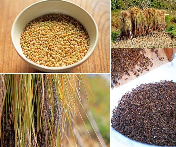 無農薬・無肥料・不耕起の自然栽培、西日本産の自然栽培「もち赤米」