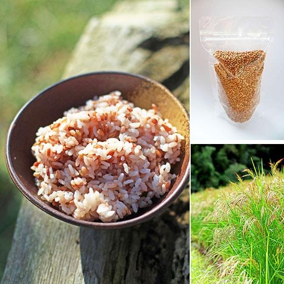 無農薬・無肥料・不耕起の自然栽培、西日本産の自然農うるち赤米