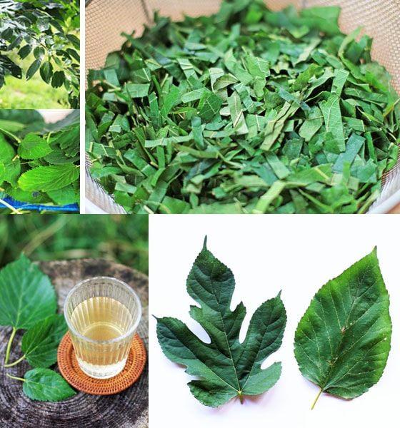 無農薬・無肥料・天日干し、吉田自然農園の自然栽培「桑の葉茶」