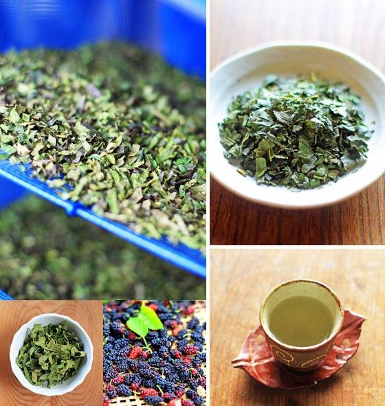 自然栽培「桑の葉茶」、無農薬・無肥料・天日干し・西日本産