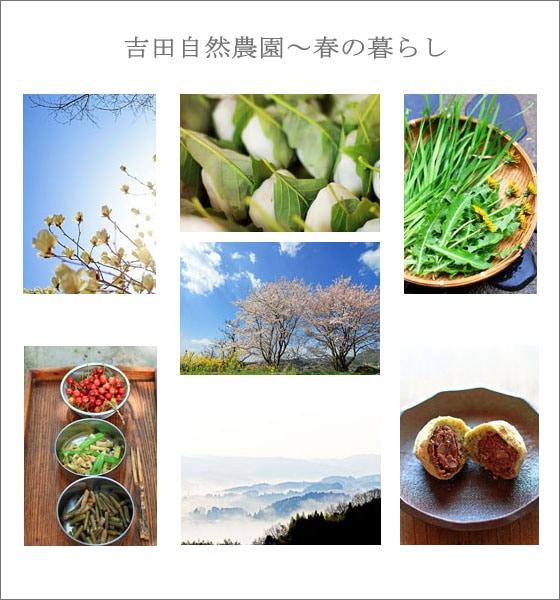 無農薬・無肥料・不耕起の自然栽培、岡山県久米南町の吉田自然農園の春