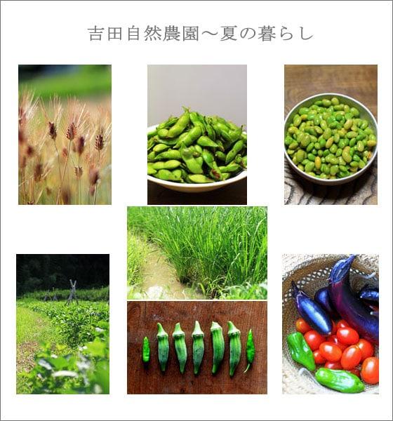 つうはん帳なっちゅ店主、吉田自然農園による、無農薬・無肥料の自然栽培の夏