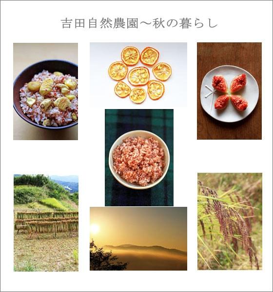 無農薬・無肥料、吉田自然農園による自然栽培の秋