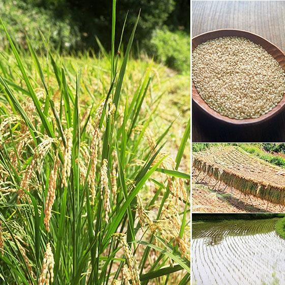 西日本産、無農薬・無肥料、自然栽培「あきたこまち玄米」