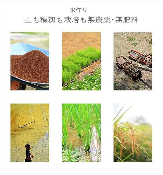 無農薬・無肥料による、自然栽培の米