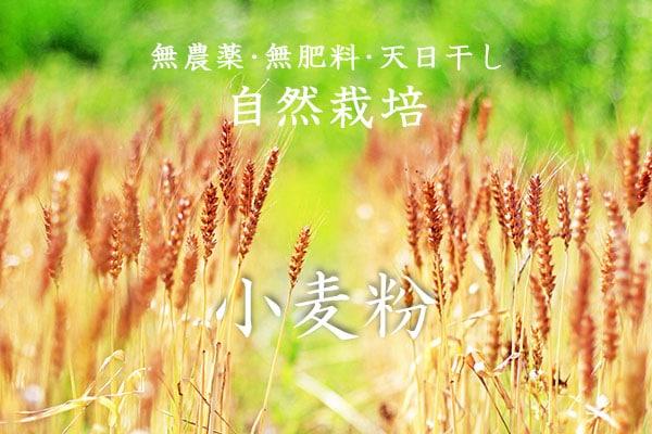 無農薬・無肥料・天日干しによる、岡山県久米南町の吉田自然農園産の自然農の小麦粉