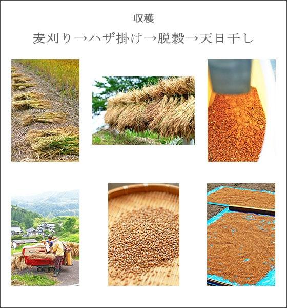吉田自然農園の小麦粉は、無農薬・無肥料による自然栽培