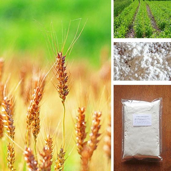 無農薬・無肥料の自然栽培、岡山県産の小麦粉ふくほのか
