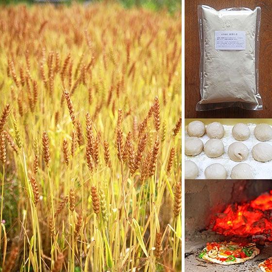 無農薬・無肥料の自然栽培、岡山県産の強力タイプの小麦粉・南部小麦
