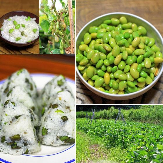 とれたて無農薬・無肥料・自然栽培の枝豆