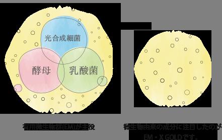 光合成細菌 酵母 乳酸菌 有用微生物群(EM)が主役 微生物由来の成分に注目したのがEM・X GOLD です。