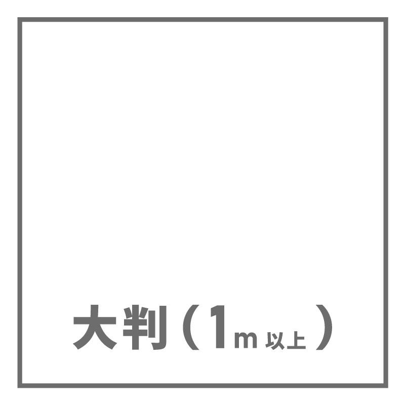 大判(1m以上)