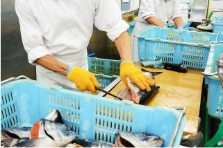 調理場魚のさばきイメージ