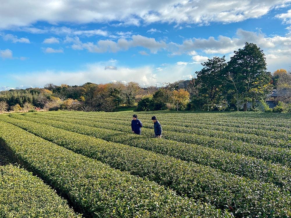 ごとう製茶の茶園に立つふたり遠景