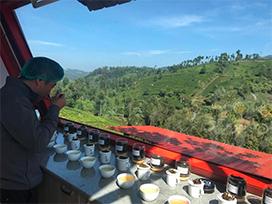 「青い山」ニルギリで育つ紅茶