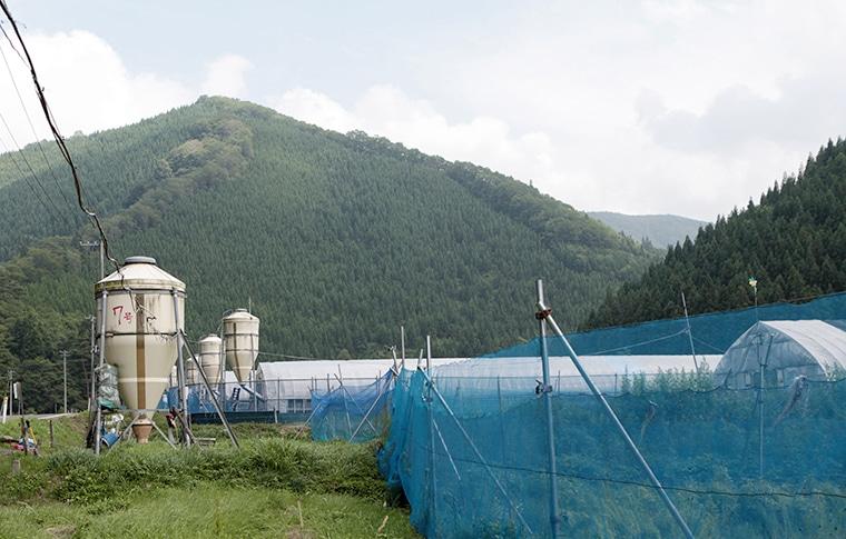 養鶏場を囲む山