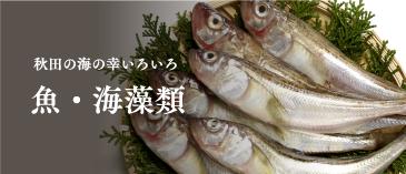 秋田の海の幸いろいろ。魚・海藻類