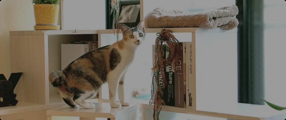 NY&と猫の健康