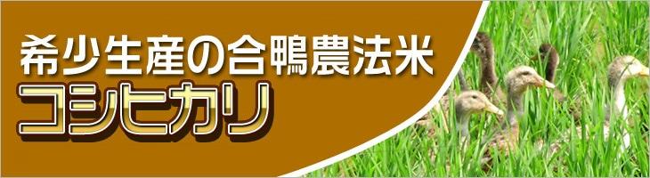 無農薬栽培 合鴨米 コシヒカリ