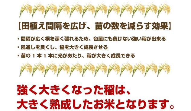 強く大きくなった稲は、大きく熟成したお米となります。